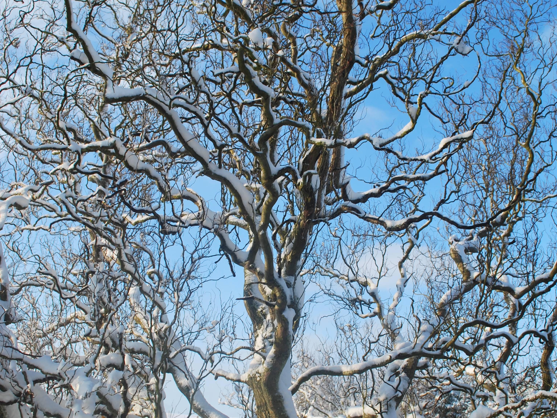 Weide im Winter